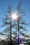 El sol entre dos árboles Fotografía de archivo libre de regalías