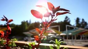 El sol es brillante a través de estas plantas comestibles almacen de video