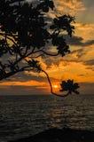 El sol es enmarcado por las flores en la puesta del sol en Kona, Hawaii Fotografía de archivo