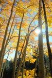 El sol estalla de detrás un tronco de árbol de abedul fotografía de archivo