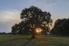 El sol fija en las ramas de un árbol Fotografía de archivo libre de regalías