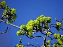 El sol ilumina las primeras hojas del verde Imagen de archivo libre de regalías