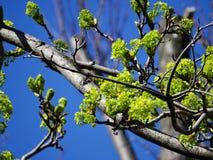 El sol ilumina las primeras hojas del verde Fotos de archivo