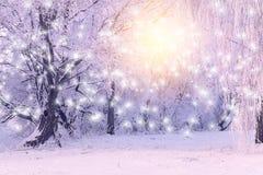 El sol naciente brilla en los copos de nieve blancos Imagenes de archivo