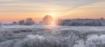 El sol naciente del invierno ilumina la hierba blanca con escarcha Imagen de archivo
