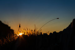 El sol pasado irradia el brillo a través de hierba Fotografía de archivo