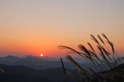 El sol poniente y la caña pasan Fotos de archivo libres de regalías