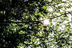 El sol que brilla a través de las hojas Imagenes de archivo