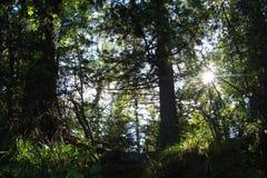 El sol se está rompiendo a través de los árboles Fotos de archivo