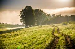 El sol se levanta sobre las nubes del mar y del oro bosque que oculta en la niebla Camino de bosque imagenes de archivo