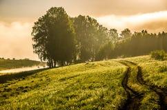 El sol se levanta sobre las nubes del mar y del oro bosque que oculta en la niebla Camino de bosque fotografía de archivo