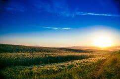 El sol se levanta sobre las nubes del mar y del oro bosque que oculta en la niebla Camino de bosque imagen de archivo libre de regalías