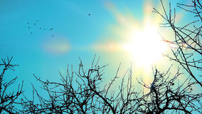 El sol y los pájaros Foto de archivo