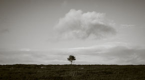 El solo árbol en amarra Imágenes de archivo libres de regalías