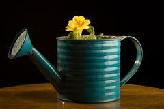 El solo crecimiento de flor amarillo en wattering puede. imágenes de archivo libres de regalías