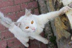 El solo gato sin hogar blanco con los ojos anaranjados está presentando al aire libre en un día soleado imágenes de archivo libres de regalías