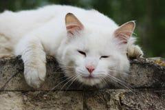El solo gato sin hogar blanco con los ojos anaranjados está presentando al aire libre en un día soleado fotos de archivo