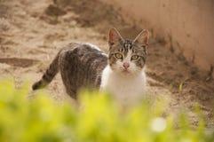 El solo gato sin hogar está caminando en yarda Foto de archivo