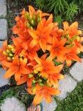 El sombrero de las flores crece bien en Ontario Imagen de archivo