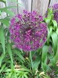 El sombrero de las flores crece bien en Ontario Imagen de archivo libre de regalías