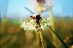 El soplar en el viento Fotografía de archivo
