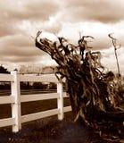 El soplo de Doth del viento del norte fotos de archivo