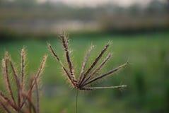 El soporte de la hierba hasta el día agradable Fotografía de archivo libre de regalías