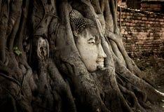El sorprender de la estatua de Buda fotografía de archivo libre de regalías