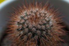 el sostenido clava el cactus Imagen de archivo