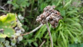 El spiderweb delicado se aferra en la flor foto de archivo