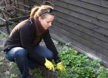 El Spring cleaning en jardín Fotografía de archivo libre de regalías