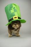 El St acaricia al perro del día Foto de archivo libre de regalías