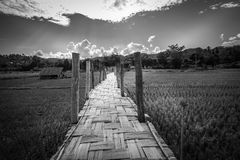 El Su Tong Pae Bridge, el puente de bambú de la fe a través del arroz coloca en la provincia de Mae Hong Son, Tailandia septentri Imagen de archivo libre de regalías