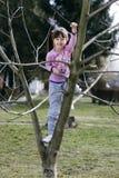 el subir del árbol Imágenes de archivo libres de regalías