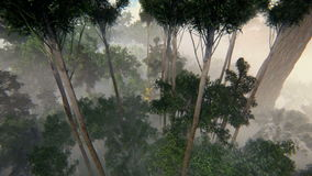El subir en las imágenes de vídeo del bosque