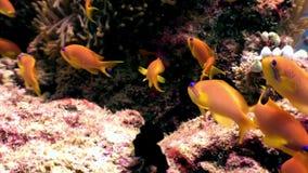 El submarino de los pescados de la escuela relaja el fondo en Maldivas metrajes