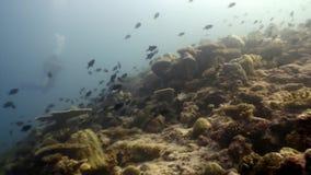 El submarino de los pescados de la escuela relaja el fondo en Maldivas almacen de metraje de vídeo