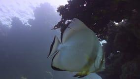 El submarino relaja el vídeo sobre la naturaleza marina en transparente puro del Mar Rojo almacen de metraje de vídeo