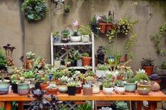 El Succulent planta el pote Imágenes de archivo libres de regalías