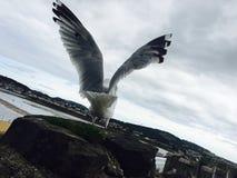 el sueño del pájaro Imagen de archivo