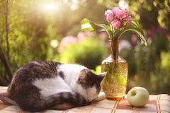 El sueño medio dormido del gato con el flox florece en florero Foto de archivo