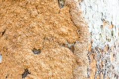 El suelo en un tronco Foto de archivo libre de regalías