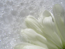 el Suelo-lavar Imagen de archivo