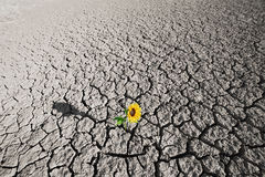 Suelo seco y planta creciente Fotografía de archivo libre de regalías