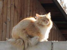 El sunbath del gato Fotografía de archivo libre de regalías