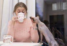 El té de consumición de la muchacha de una taza en la tabla, gato calvo sube en el th Imagenes de archivo