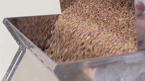 El técnico de laboratorio divide el grano para el control de calidad almacen de video