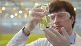 El técnico de laboratorio examina la hoja verde en invernadero derecho del frasco en hidrocultivo almacen de video