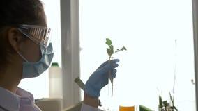 El técnico de laboratorio examina muestras de plantas genético modificadas en el tubo de ensayo en laboratorio moderno en la ilum almacen de video