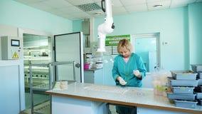 El técnico de laboratorio que estudia, examina las semillas brotadas, arraigadas del maíz, en laboratorio Investigación del labor almacen de metraje de vídeo